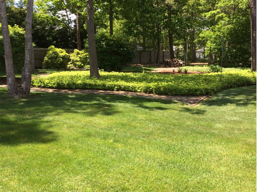 landscaping designs